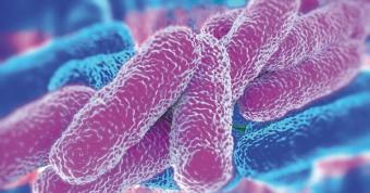 Πιστοποιημένη εξ αποστάσεως εκπαίδευση υπεύθυνων για τον έλεγχο του βακτηρίου Legionella spp. (Νόσος των Λεγεωνάριων).