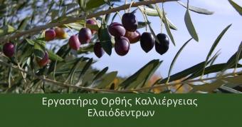 Εργαστήριο ορθής καλλιέργειας ελαιόδεντρων. - Έναρξη: 13/10/2020