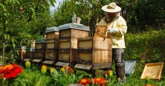 Μάθετε τις βασικές αρχές της μελισσοκομίας και ξεκινήστε τα πρώτα σας βήματα.  Έναρξη - 14/10/2019