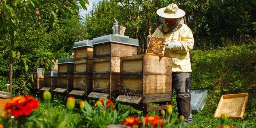 Μάθετε τις βασικές αρχές της μελισσοκομίας και ξεκινήστε τα πρώτα σας  βήματα. Έναρξη: 27/10/2020